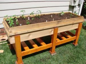 raised garden bed 2