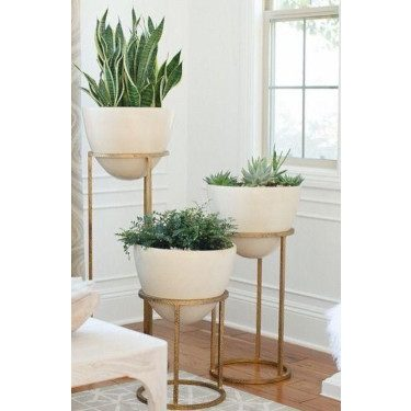 Stylish houseplants 2019