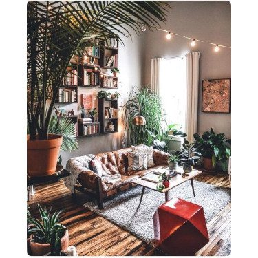 refresh w houseplants