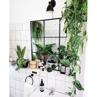 plants bathroom