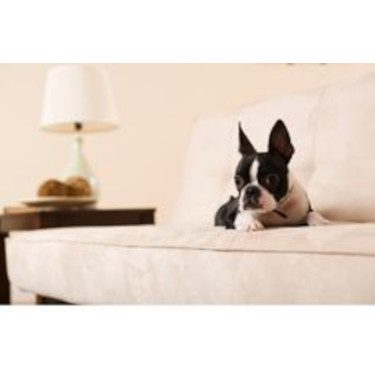 Microfiber Sofa Pet designs