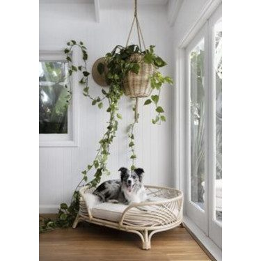 Pet Bed Design